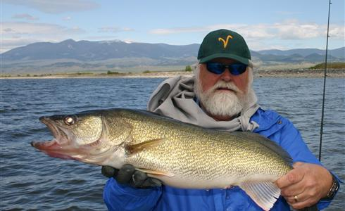 32 inch walleye. May. Canyon Ferry Lake. Caught by Larry Jarvis